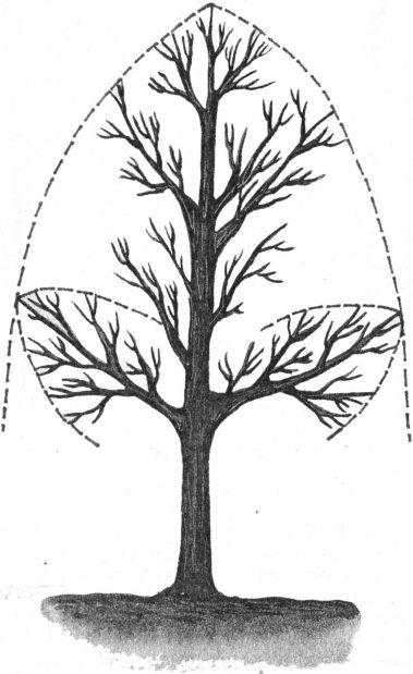 Схема обрезки дерева с учётом
