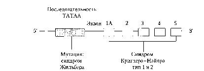 Из наследственных нарушений обмена билирубина наиболее часто наблюдают синдромы Криглера-Найяра I типа и Жильбера. Синдромы Криг- лера- Найяра II типа  Фото 1