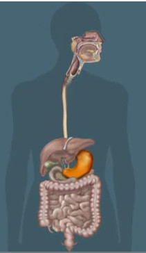 Синдром раздраженного кишечника - это заболевание, которое характеризуется часто сменяющимися периодами запора и диареи и обычно сопровождается болью или вздутием  Фото 1