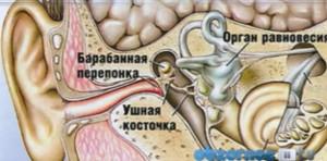 Отит - это общее определение различных воспалительных заболеваний уха. Среднее ухо — это система воздухоносных полостей, включающая: барабанную полость  Фото 2