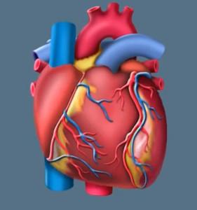 Симптомы порока сердца Фото 1