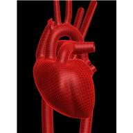 Инфаркт миокарда — это некроз участка сердечной ткани. Между стенокардией и инфарктом миокарда существует тесная связь; если при стенокардии Фото 1