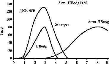 Анти-НВе в сыворотке крови в норме отсутствует. Появление анти-HBe, АТ указывает обычно на интенсивное выведение из организма вируса ВГВ  Фото 1