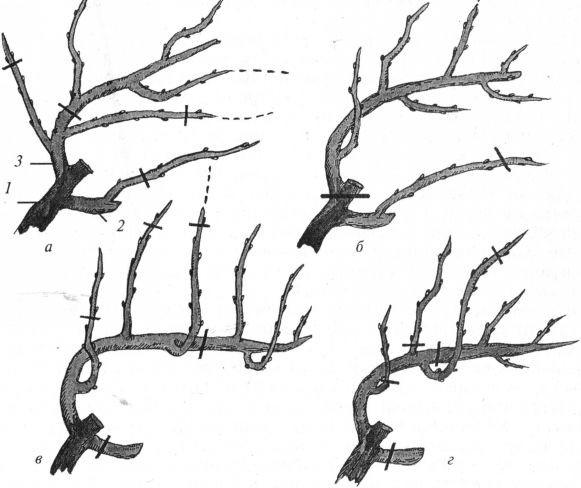 Обрезка винограда осенью для начинающих в картинках пошагово видео, послать открытку