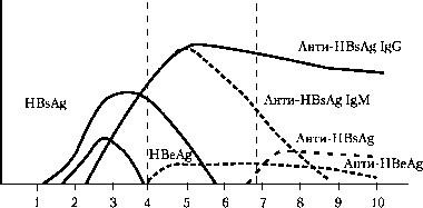 Анти-НВе в сыворотке крови в норме отсутствует. Появление анти-HBe, АТ указывает обычно на интенсивное выведение из организма вируса ВГВ  Фото 2