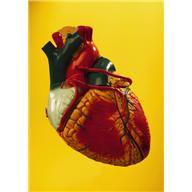 Аритмия — нарушение нормального ритма сердечных сокращений, учащение или замедление его. Наличие аритмии легко обнаружить по «неправильности» пульса. Фото 1