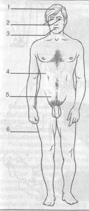 Синдром приобретенного иммунодефицита ( СПИД ) - состояние тяжелого поражения иммунной защиты, вызываемое воздействием на иммунную систему вируса иммунодефицита человека  Фото 2