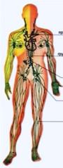 Лимфогранулематоз - первичное опухолевое заболевание лимфатической системы, сопровождающееся увеличением лимфатических узлов, нередко селезенки и других органов. При микроскопическом  Фото 1