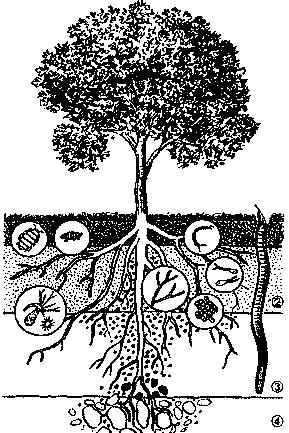 Увлажняемый слой почвы