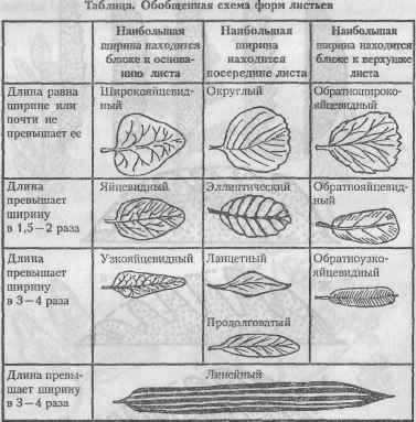 Классификация растений